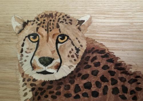 Muller Cheetah